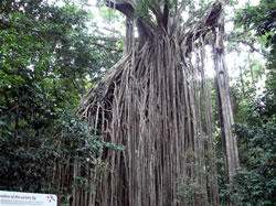 Cairns discount rainforest tours